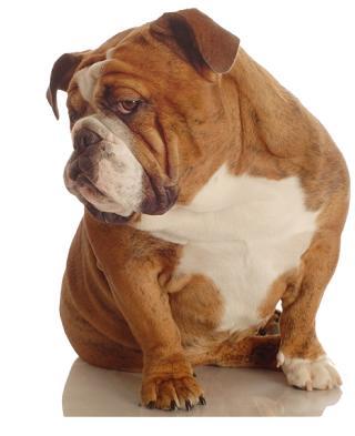Comportamento da tenere con il cane for Cani da tenere in casa
