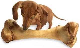 I cibi velenosi per il cane e gli alimenti da evitare - Cane che mangia a tavola ...