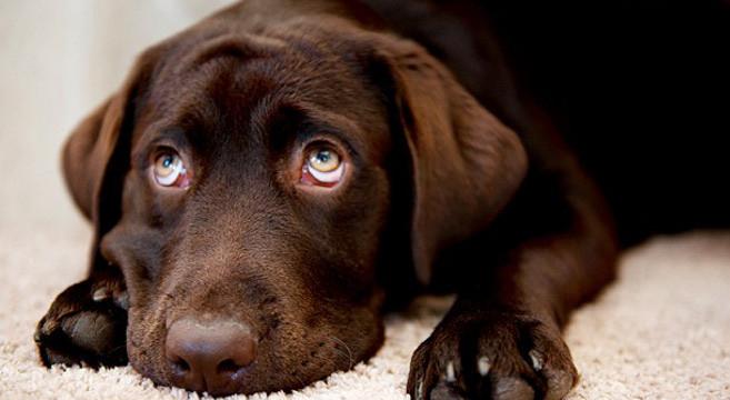 Come affrontare i problemi causati dal cane for Piani casa cane trotto