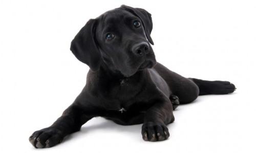 Come scegliere un cucciolo - Eliminare odore pipi cane giardino ...
