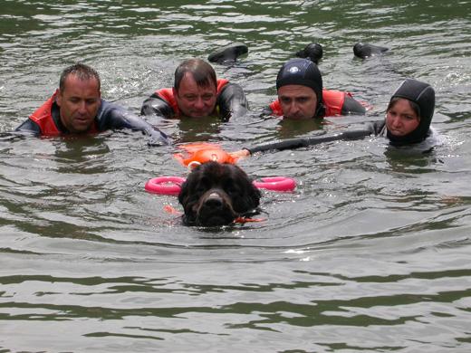 cães busca de sobreviventes