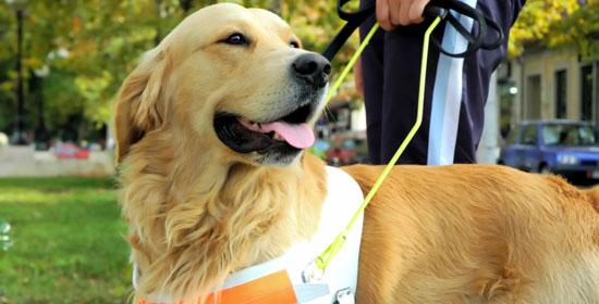 cães de resgate e salvamento