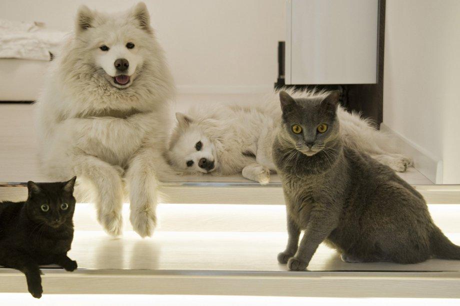 Maturità sessuale del cane e del gatto