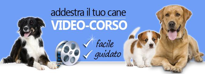 Educare il tuo cane in casa semplice ed economico for Educazione cane